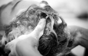best hair follicle detox shampoos